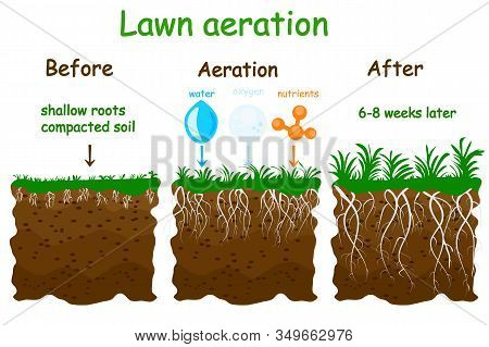 Lawn Aeration Stage Illustration. Before And After Aeration. Gardening Grass Lawncare, Landscaping,