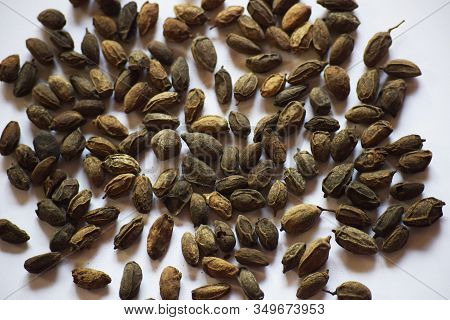 Dried Neem Seeds Also Known As Azadirachta Indica Is Dried Herb Used In Ayurveda For Medicinal Purpo
