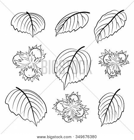 Set Of Plant Pictograms, Filbert, Hazelnut And Leaves Black On White Contours. Vector