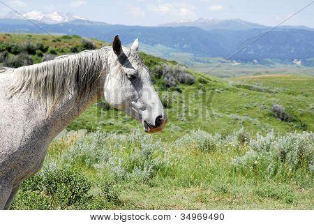 Wild Horse Home On The Range.