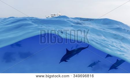 A Group Of Dolphins Dives Underwater Against The Background Of A Moored Yacht In The Open Sea. Under