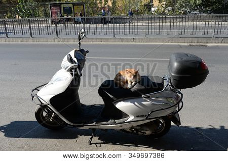 Istanbul,turkey - November 3, 2019:homeless Red Cat Basks On A Scooter Seat On The Street Of Istanbu