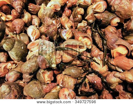 Closeup View Of Pile Of Raw Whelks On Sale On Local Seafood Market