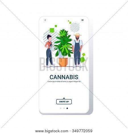Farmers Couple Watering Cannabis Industrial Hemp Plantation Growing Marijuana Plant In Pot Drug Cons