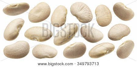 White Bean Collection Isolated On White Background