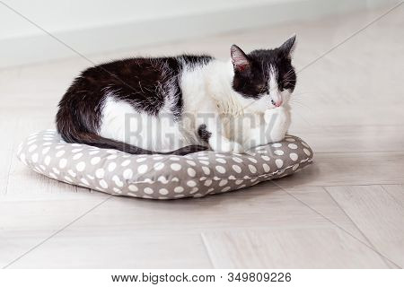 A Domestic Cat Lies On A Pillow And Nibbles Its Claws. Pets
