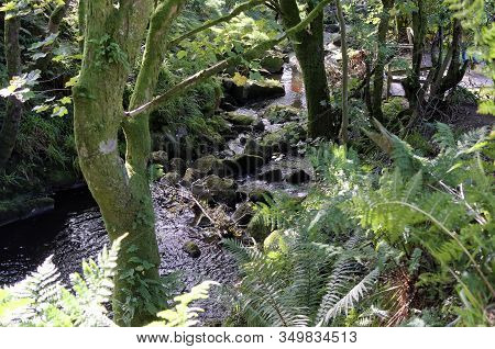 Small Forrest River And Waterfall Through Trees