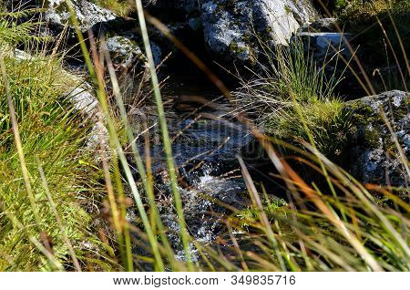 Small Forrest River Through Grass View Photography