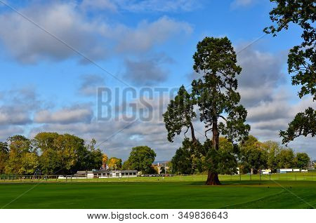 Big Tree In Malahide Park Near Dublin City Ireland