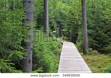 Wooden Footbridge In Forest Over Peat Bog And Swamp Tourist Path