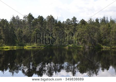 Landscape With Reflecting Forest In The Lake