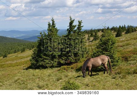 Brown Horse Feeding Grass In The Hills