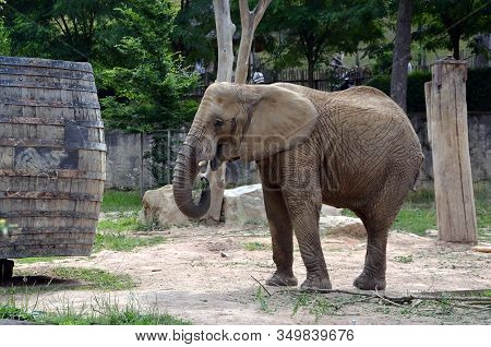 Big Elephant In Zoo Park Animal Detail Photography