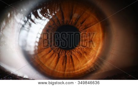 Close-up Human Eye, Lens, Cornea And Brown Iris. Eye Health Prevention. Examination Symptoms Disease