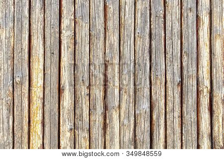 Background Of Old Wood Trunks Of Trees With A Treated Surface
