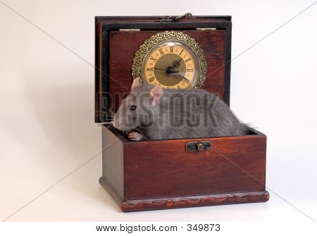 Mouse In Wooden Casket