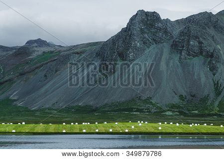 White Plastic Silage Wrapped Bales With Hay On Green Grass Hill Near Lake In Iceland. Farming In Sca
