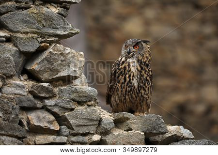 A Big Brown Eared Owl Sits On An Ancient Stone Wall. Bubo Bubo, Close Up. Eurasian Eagle-owl