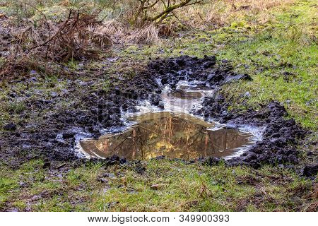 Puddle In Swampy Area. Ice On The Edge Of A Puddle In The Woods. Spring Season.