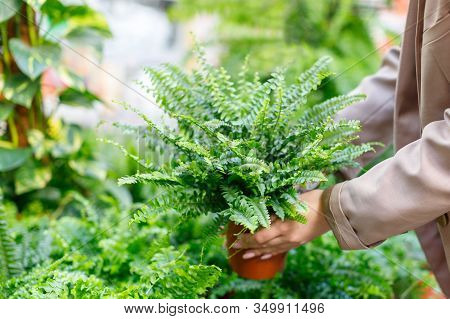 Gardening, Planting Concept. Businesswoman Choosing Potted Plants -lush Nephrolepis Fern For Her Hom