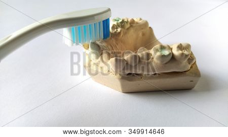 Toothbrush And Mock Human Jaw. Plaster Lower Jaw. Dental And Health Care Concept. White Background.