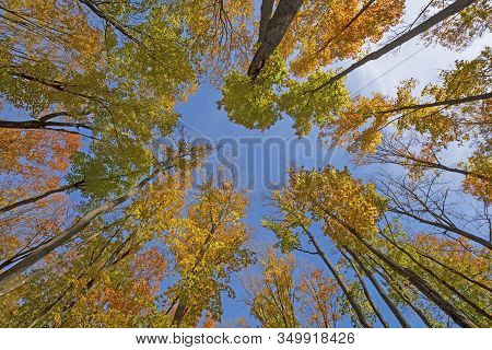 Fall Colors High In The Air In The Louis M Groen Nature Preserve In Michigan