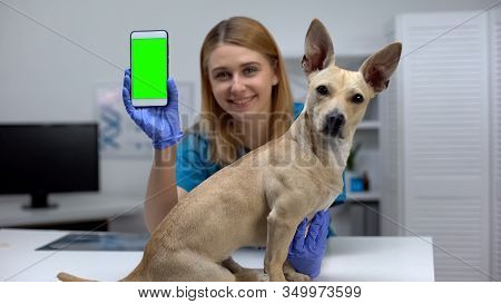 Smiling Animal Clinic Doctor Showing Green Screen Phone, Online Pet Checkup App