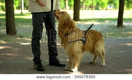 Dog Handler Training Pet, Feeding Retriever For Good Behaviour And Obedience