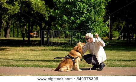 Blind Male Stroking Guide Dog In Park, Best Friend Of People, Guidance Concept