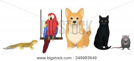 House Pets Vector Illustration. Cat, Dog, Parrot, Leopard Gecko And Mouse Isolated On White Backgrou