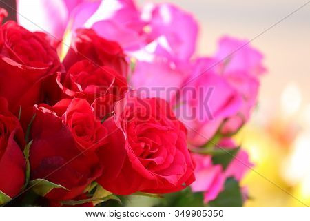 Close Up Of Three Red Roses With Blur Pink Roses Background In Street Rose Flowers Market, Rose Flow