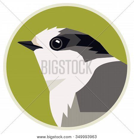 Wild Birds Canada Gray Jay Vector Illustration Round Frame Isolated Object