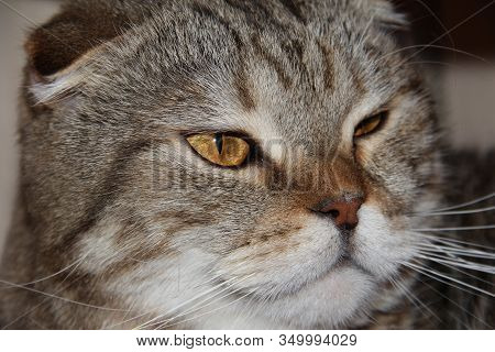 The Cat Winks. Emotions Of Mammalian Animals.