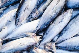 Fresh Tuna Fish Background Sell In Seafood Market