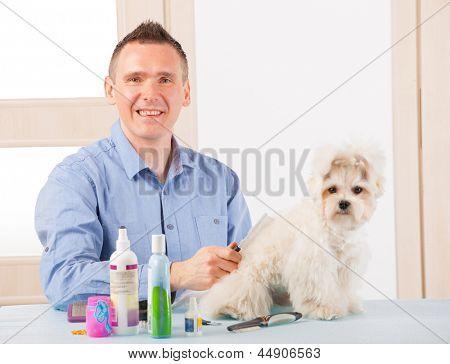 Smiling man grooming a dog purebreed maltese.