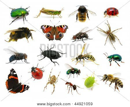 Set of insects on white