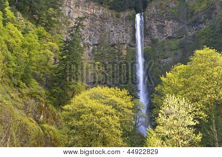 Spring In Multnomah Falls Oregon.