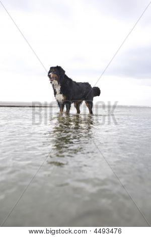 Hero Shot Of Dog In Ocean