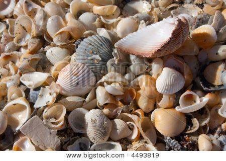 Seashells Washed Up On Beach