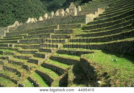 Terraced Fields In The Mountains Of Peru