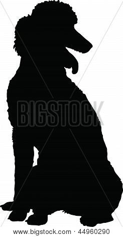 Poodle Silhouette