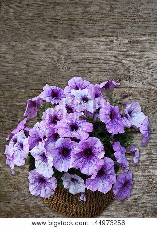 petunia flowers against wood background
