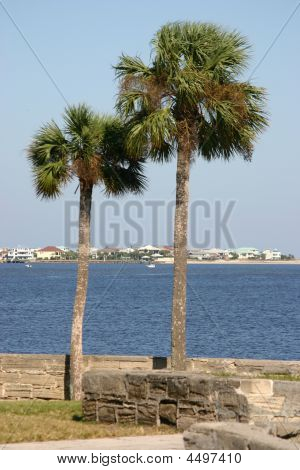 Majestic Palm Trees