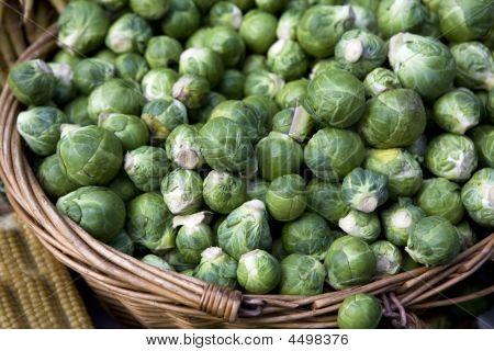 Brussels  Sprout. Brassica Oleracea Gemmifera Group.