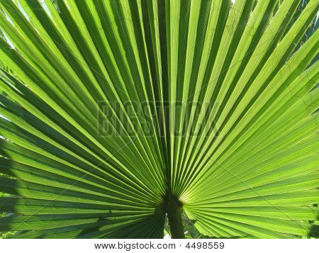 Fanned palm tree leaf on a tropical beach poster