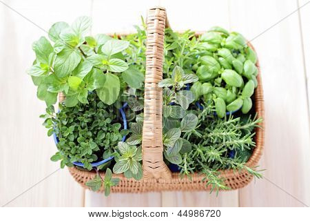 basket full of fresh herbs - herbs and spices