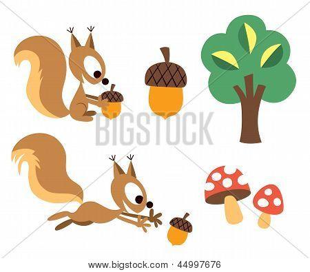 Squirrel & acorn design elements set