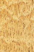 Texture of birch (high-detailed wood texture series) poster