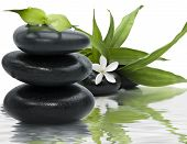 Spa still life with black stones and bamboo leafs in the water poster