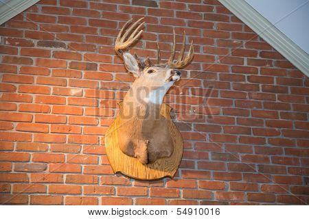 Deer Head On A Brick Wall